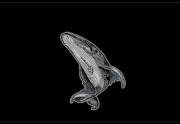 Whale drawing for t-shirts